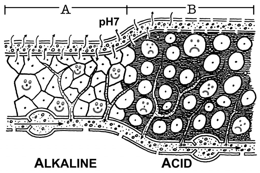 A. Alkaline state in the body     Healthy, happy cells receiving essential nutrients and oxygen  B. Acid state in the body