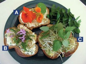 Slices of bread topped with A. honey, kefir, fenugreek sprouts and nasturtium flowers B. kefir spread seasoned with onion chives and caraway seeds, topped with fenugreek sprouts, sheep sorrel leaves and society garlic flowers C. avocado topped with fenugreek and lemon balm.