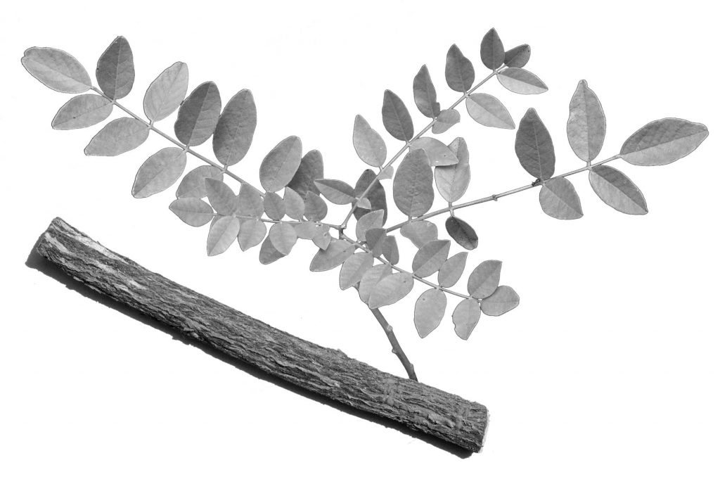 Cut Licorice Root & Leaves