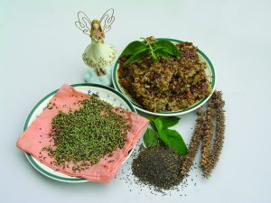 Chia seeds sprouting - honey chews and chia seeds